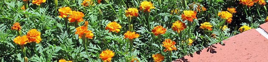 花壇や家庭菜園の提案指導